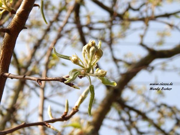 02-04-2014-lessas-decke-und-blumen-020