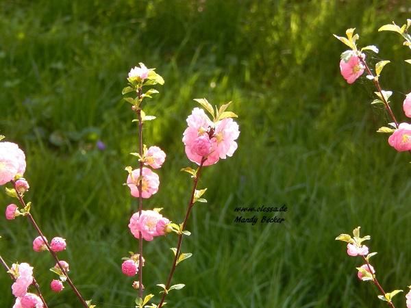 02-04-2014-lessas-decke-und-blumen-027