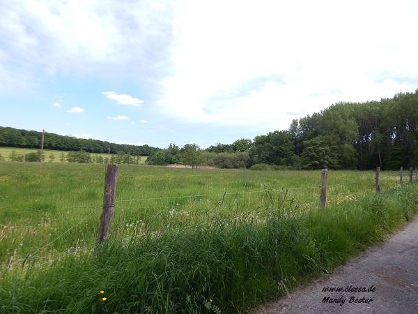 18.05.2014 - 25.05.2014 - Urlaub in Darlingeroda (Harz) 123