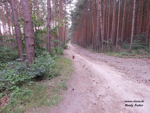 24.06.2014 - Dölauer Heide 029