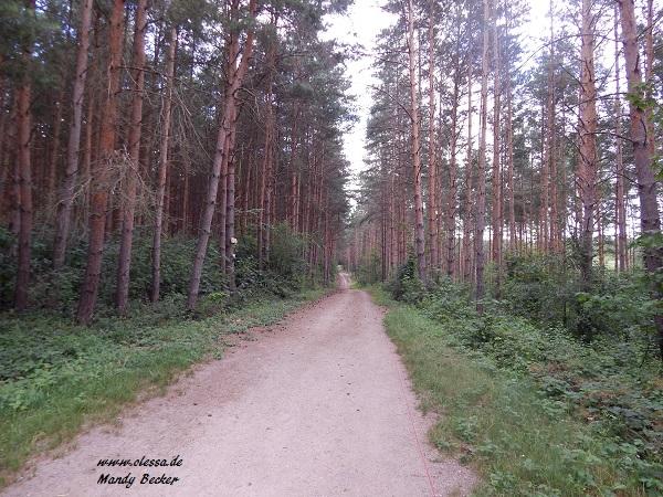 24.06.2014 - Dölauer Heide 033